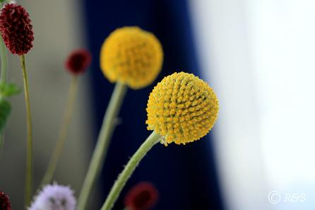 ジャンヌダルクの花瓶38IMG_9124
