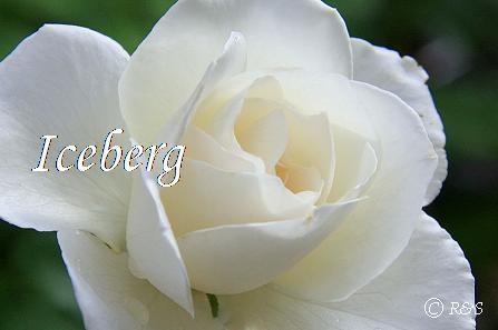 アイスバーグ103IMG_9424