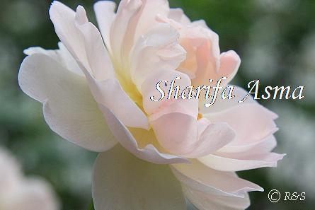 シャリファ・アスマ103IMG_9432