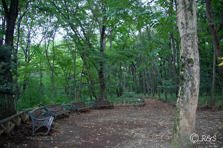 神代植物園-木々2IMG_9831