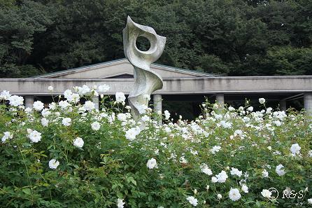 c神代植物園ーアイスバーグ1IMG_9800