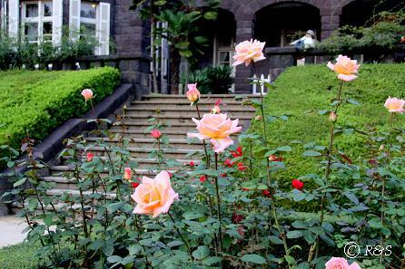 旧古河庭園27サマードリームIMG_7002