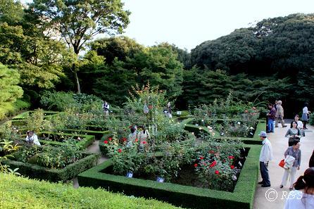 旧古河庭園43IMG_6959