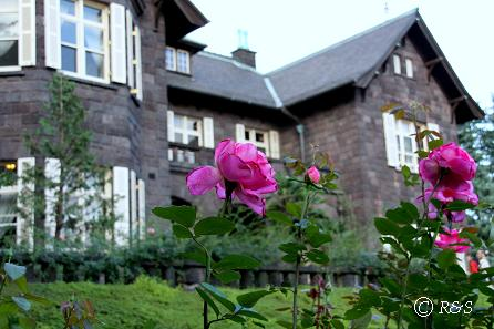 旧古河庭園23ピンクピースIMG_6982