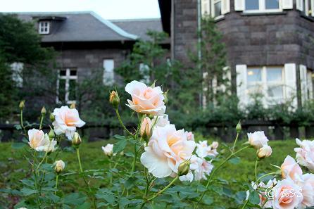 旧古河庭園21IMG_6976