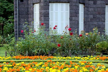 旧古河庭園44IMG_7035-1