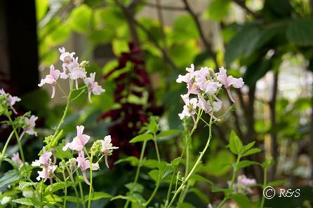 庭の花15