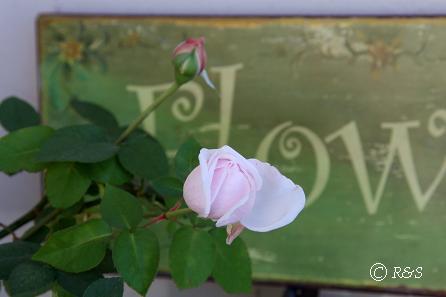 19スヴニール・ドゥ・ラ・マルメゾンIMG_9520