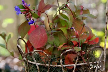 20草花の紅葉IMG_9631