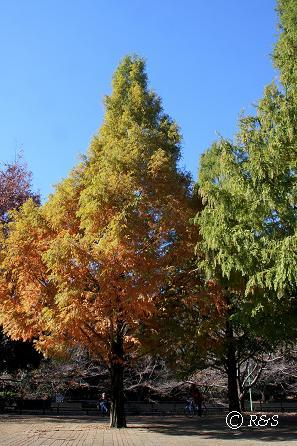 公園の木2IMG_0044
