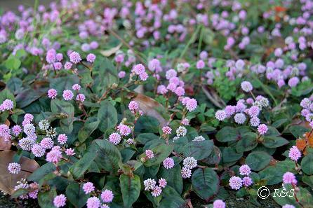 公園の花1IMG_0048