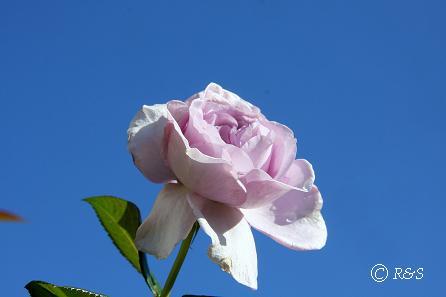 公園の花2IMG_0042-1