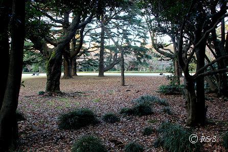 新宿御苑17IMG_0180