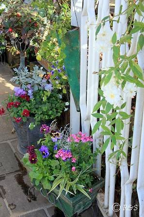庭の花107-2IMG_9513