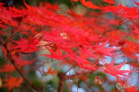 03成城の紅葉2IMG_0561