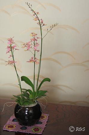 正月の花301IMG_1861