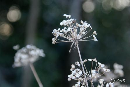 冬の景色3IMG_2433