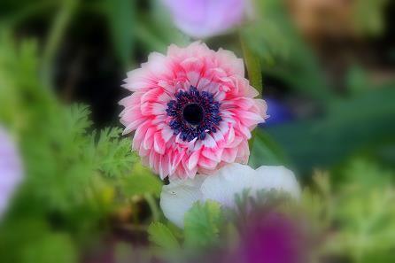 こもれびの庭16IMG_3705
