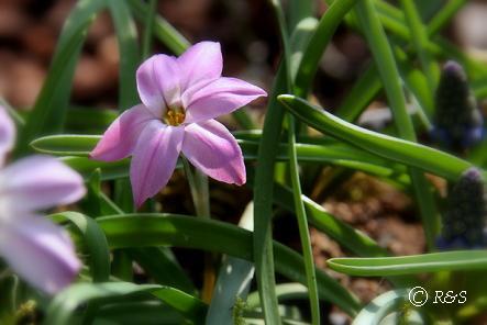 庭の花1IMG_3750
