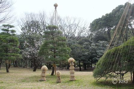 代々木公園2IMG_4381