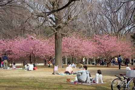 代々木公園-桜2IMG_4404