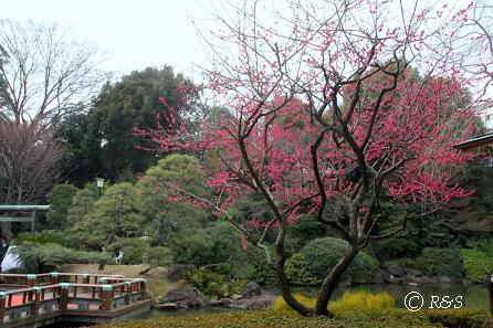 東郷神社1IMG_4491