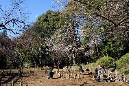 有栖川宮記念公園22IMG_4603