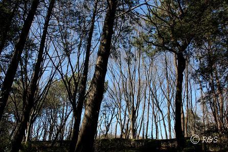 羽根木公園20IMG_4594