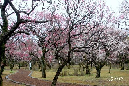 神代植物園12IMG_5318