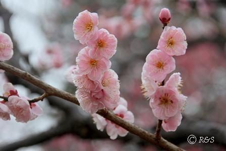 神代植物園11IMG_5314-1