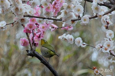 神代植物園16IMG_5328-1