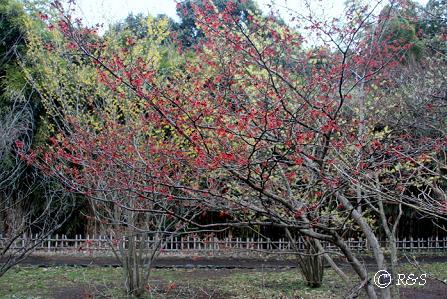 神代植物園19IMG_5341