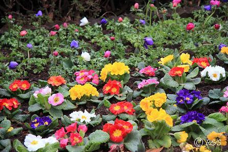 神代植物園-花壇2IMG_5344