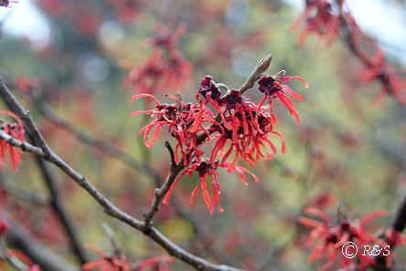 神代植物園20IMG_5342