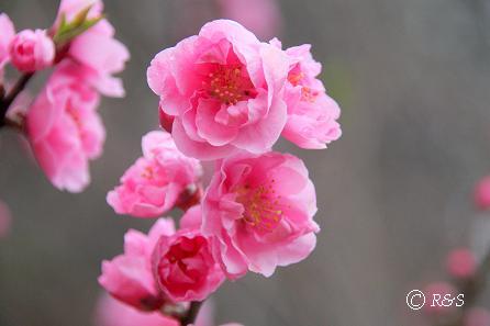 神代植物園27IMG_5350-1