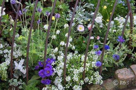 庭の花畑4IMG_6128-3