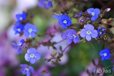 庭の花2IMG_5857