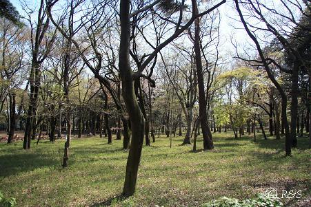 井の頭公園ー木々2IMG_6354