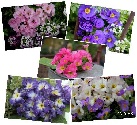 庭の花101