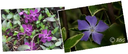 庭の花103