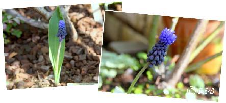 庭の花102