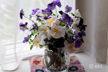 パンジー花瓶1小IMG_8693