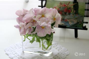 パンジー花瓶2小IMG_8804