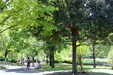 公園3IMG_9519