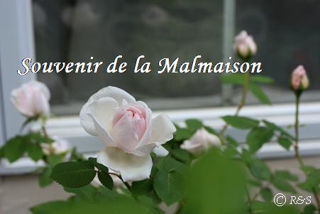 マルメゾン216IMG_9806