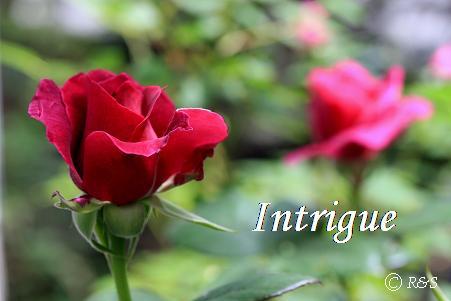 イントリーグ112IMG_0805