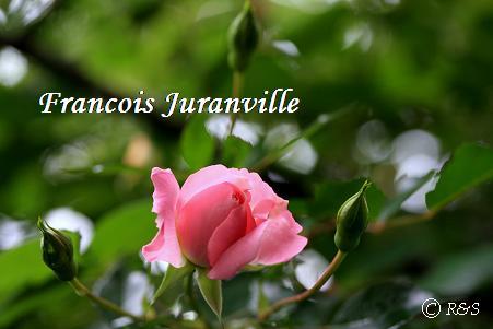 ジュランビル104IMG_2221