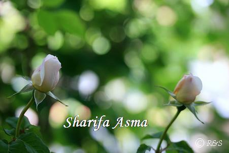 シャリファアスマ116IMG_3840