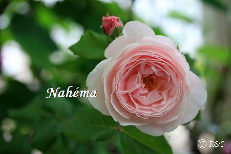 ナエマ116IMG_4731