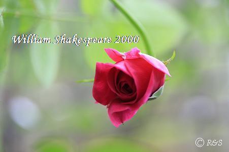 ウイリアムシェークスピア114IMG_4711